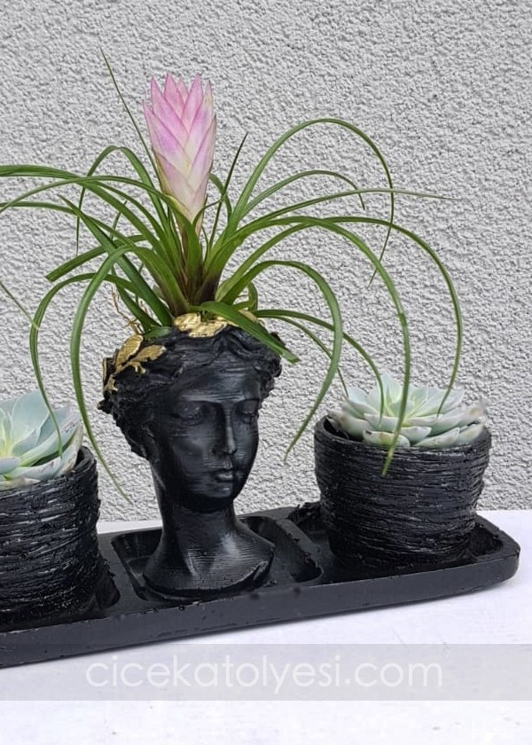 Ekeveria ve Tillandisia Set