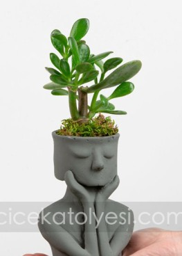 Think Biblo Crassula